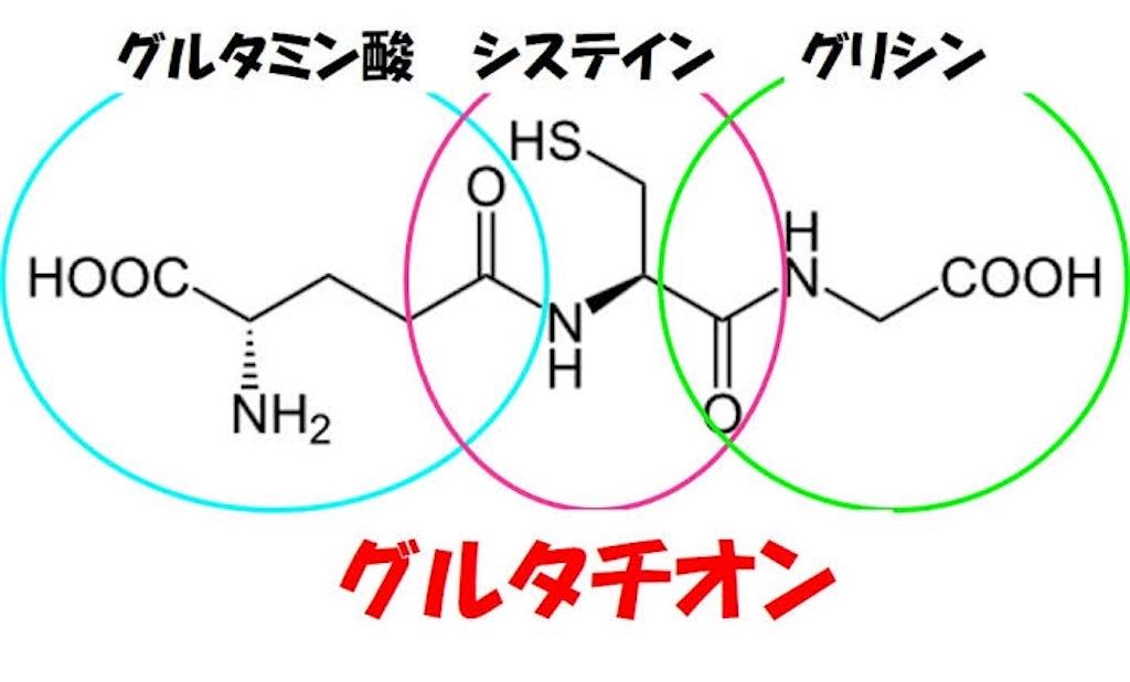 f:id:yukuma0721:20190605142409j:image