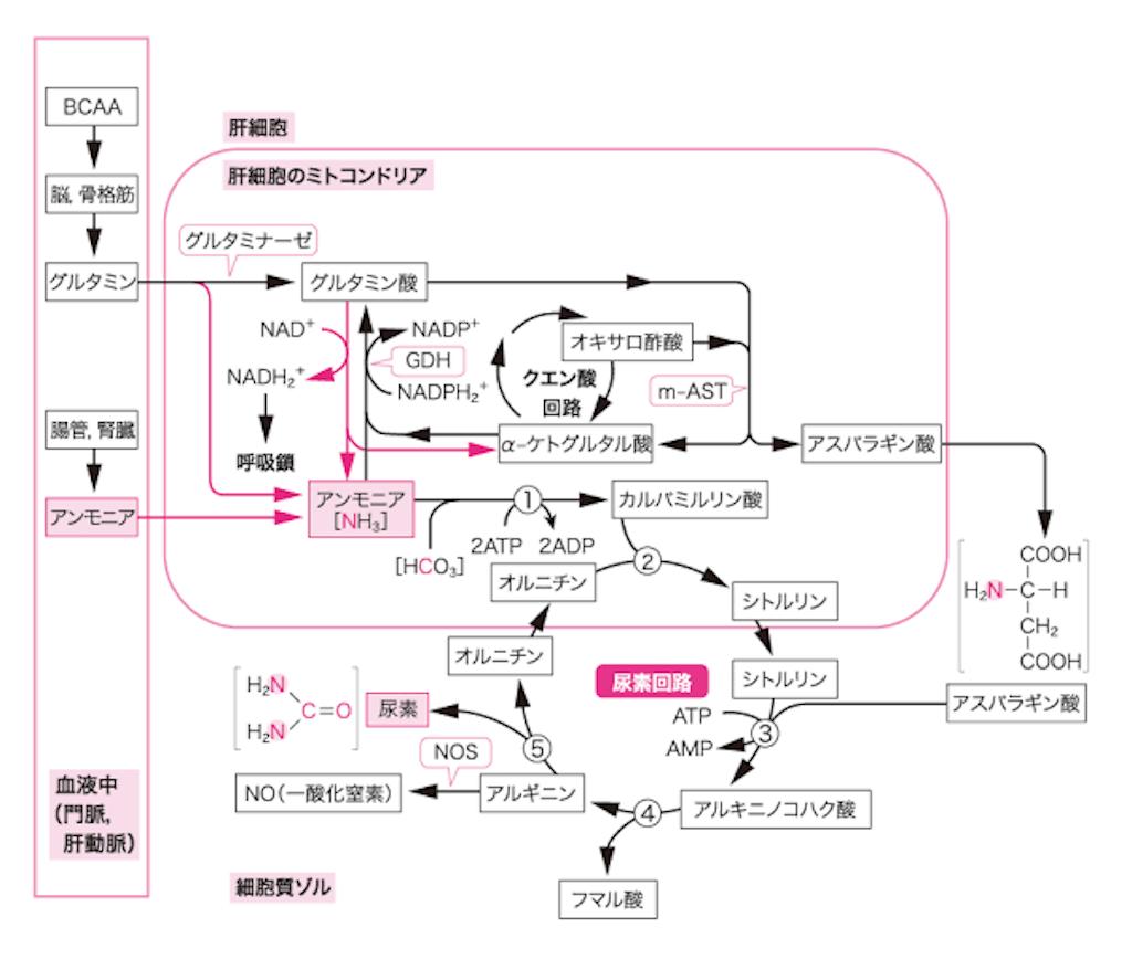 f:id:yukuma0721:20190607135032p:image