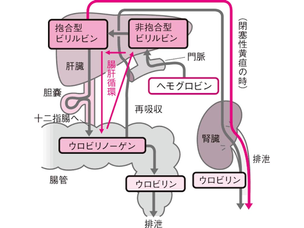 f:id:yukuma0721:20190607140126p:image