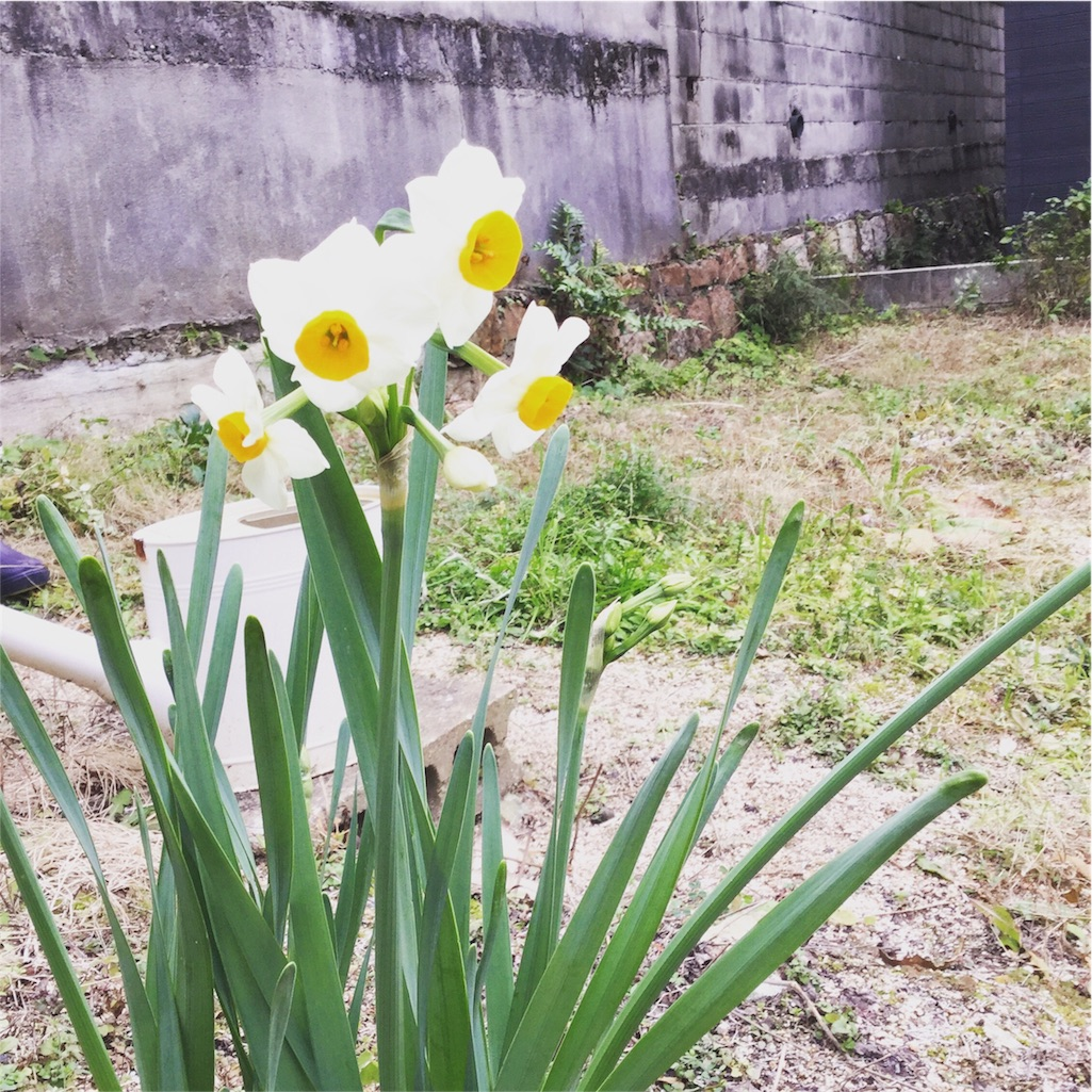 f:id:yukurinko:20170105161803j:image