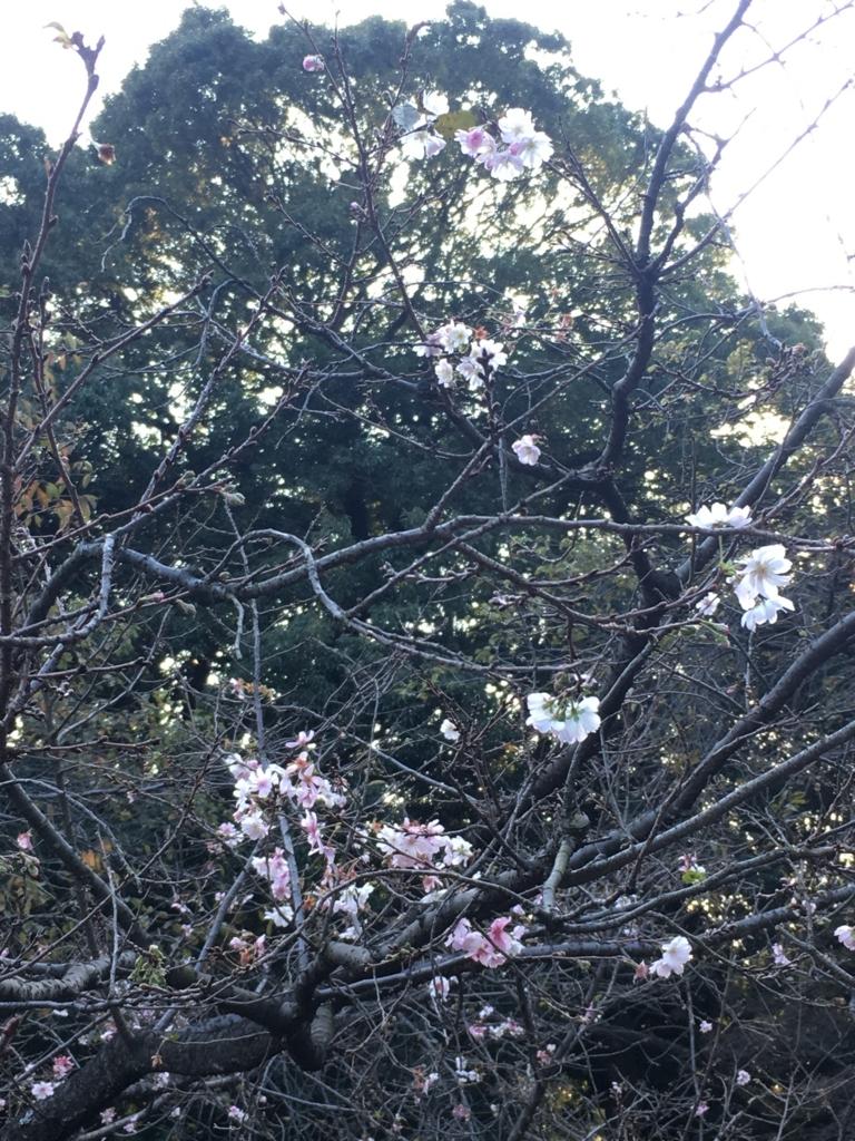 f:id:yukusora1:20171105191718j:plain