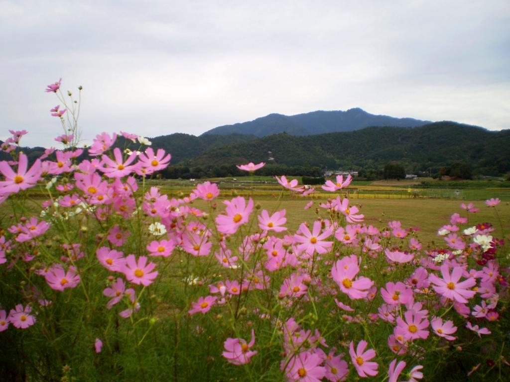 f:id:yuluttoKyoto:20161027110230j:plain