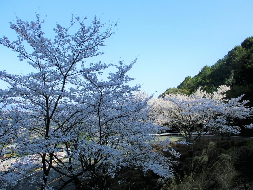 f:id:yuluttoKyoto:20180413152503j:plain