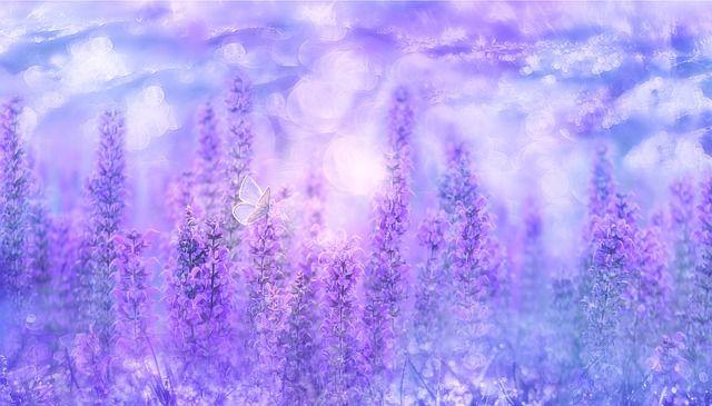 紫色で分かる心理と性格
