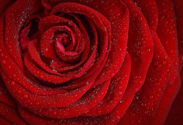 赤色で分かる心理と性格