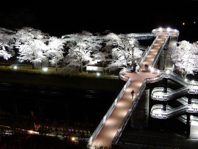 白石川堤一目千本桜の桜ライトアップが一望