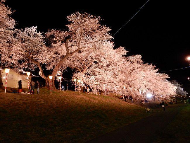 一目千本桜ライトアップ1