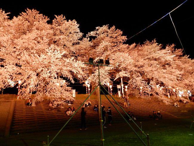 一目千本桜ライトアップ2