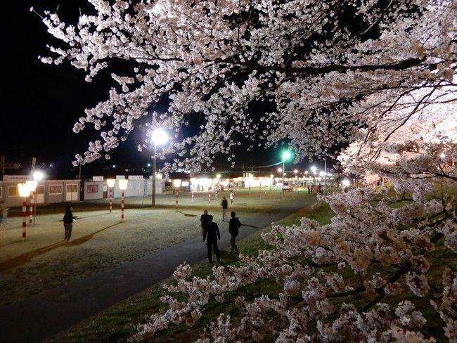 一目千本桜ライトアップ3