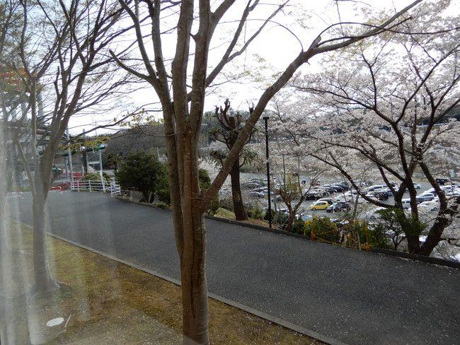 【口コミ&レビュー】ウイルポートの部屋からは桜が見える