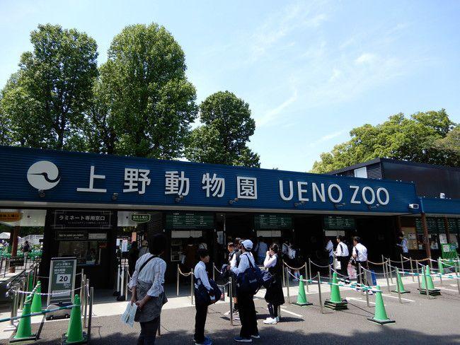 上野動物園のパンダの混雑状況や待ち時間、観覧方法を全て徹底解説、東門入場口