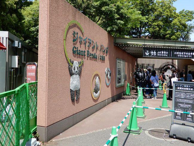 上野動物園のパンダの混雑状況や待ち時間、20分待ち