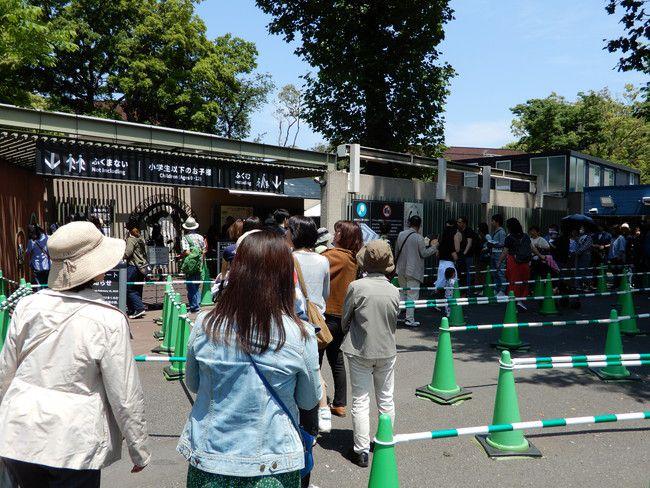 上野動物園のパンダの混雑状況や待ち時間、観覧方法を全て徹底解説、整理券は無いので並んだ順番