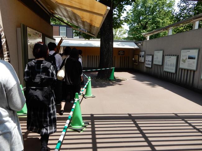 上野動物園のパンダの混雑状況や待ち時間、観覧方法を全て徹底解説、ゲートをくぐればパンダとご対面