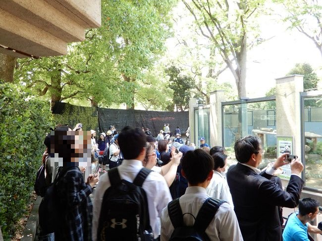 上野動物園のパンダの観覧の撮影風景2、上野動物園のパンダの混雑状況