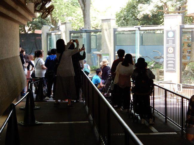 上野動物園のパンダの観覧の撮影風景、混雑状況