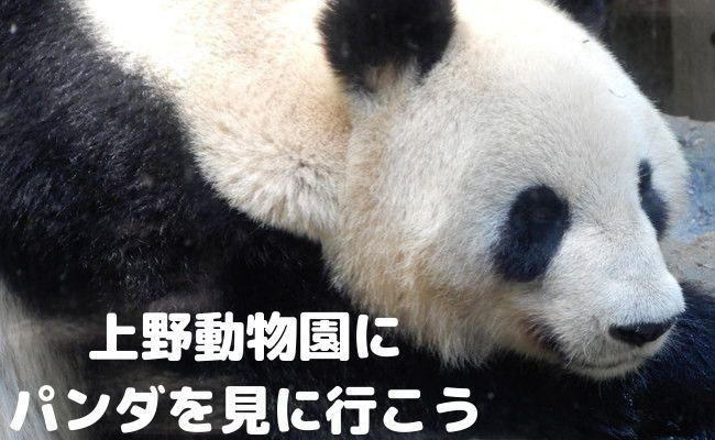 【初めて行く方へ】上野動物園のパンダの混雑状況や待ち時間、観覧方法を全て徹底解説!