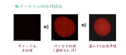 ハーブガーデンシャンプー成分解析、セリペアは浸透が早いだけでなく、持続効果も高い