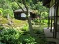 鎌倉 海蔵寺にて 左手前には、ハンゲショウ