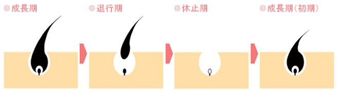 f:id:yumeha-sekaiissyu:20191206102438j:plain
