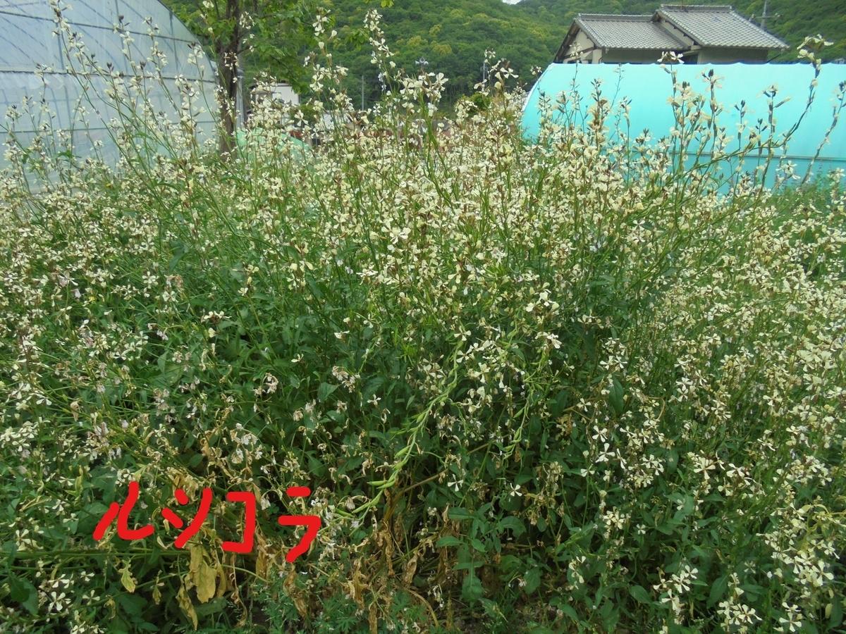 f:id:yumehyakusho:20200510132945j:plain