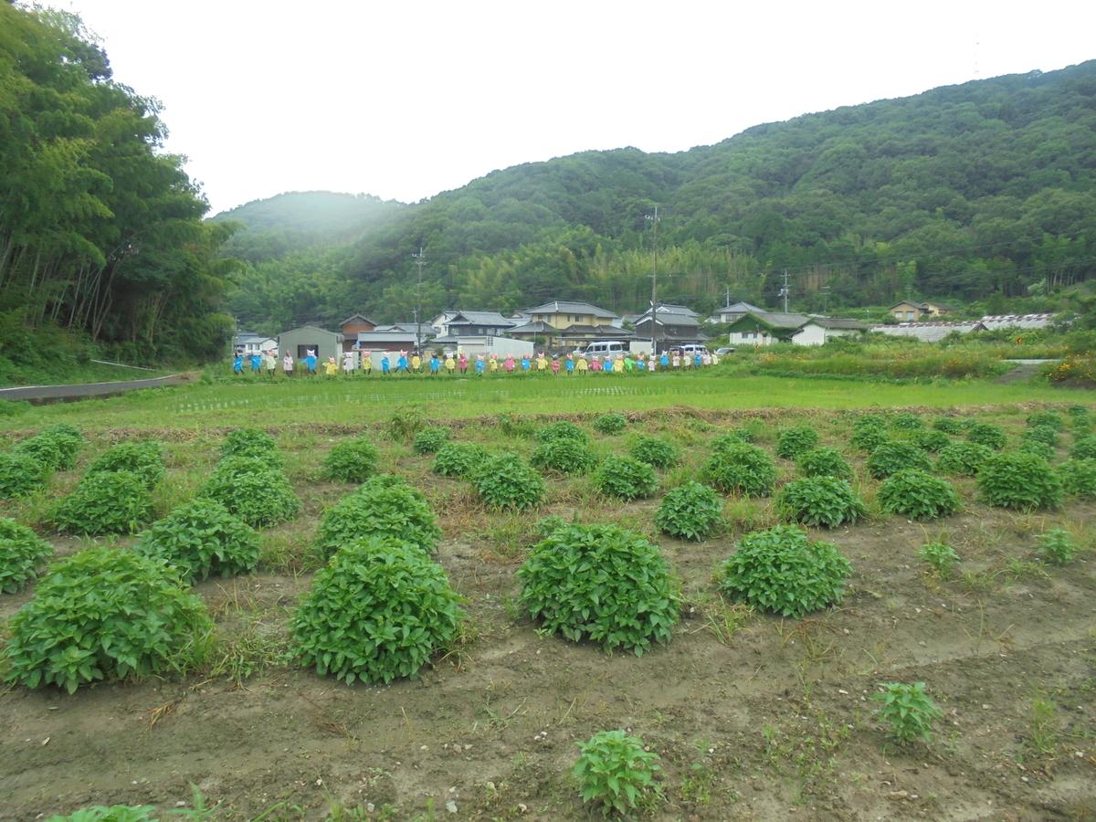 f:id:yumehyakusho:20200722200745j:plain