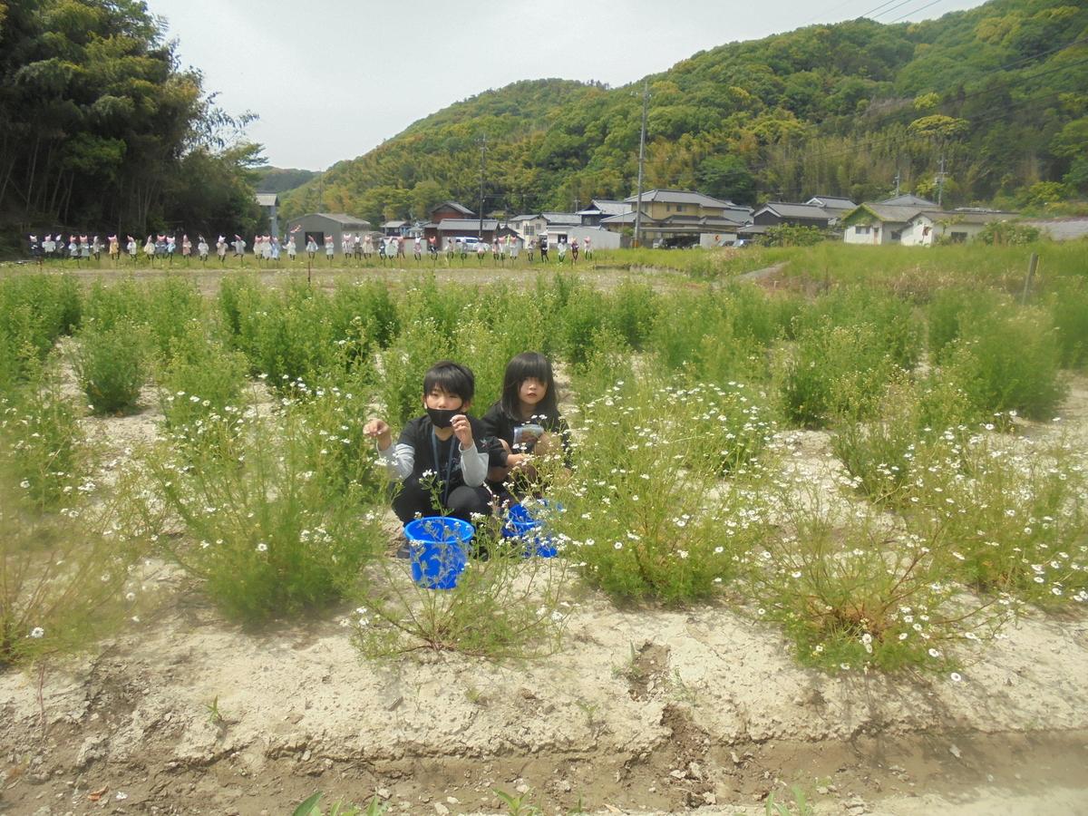 f:id:yumehyakusho:20210505144019j:plain