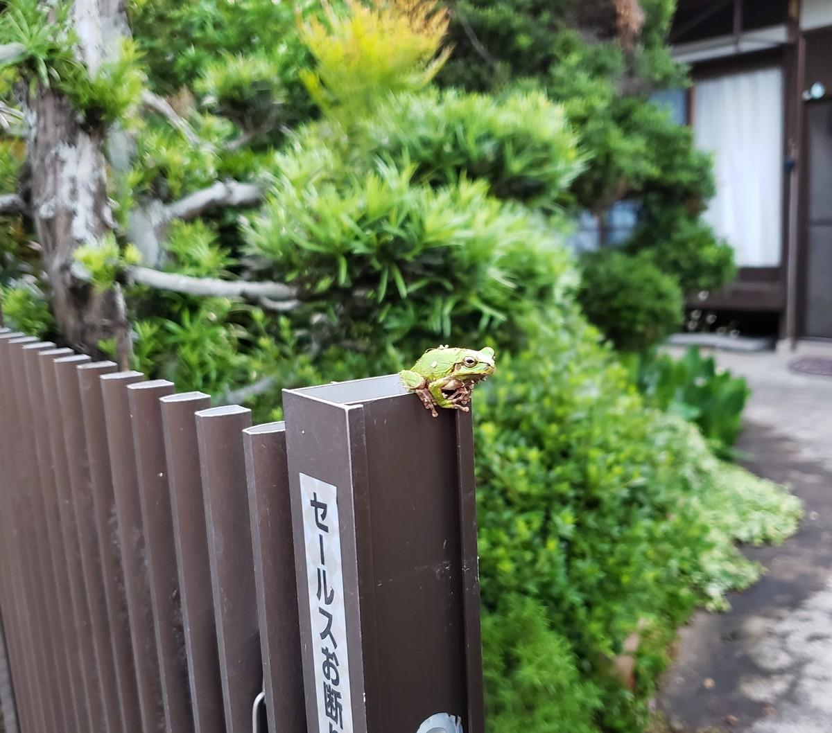 f:id:yumejitsugen1:20190613190513j:plain