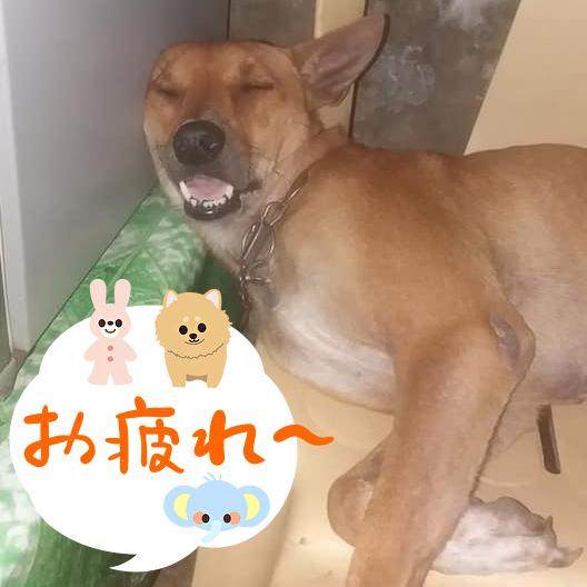 f:id:yumekake-john-ngohope:20200828205453j:plain