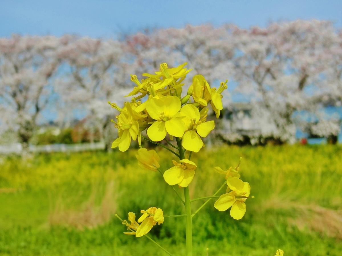 f:id:yumekake-john-ngohope:20210326182652j:plain