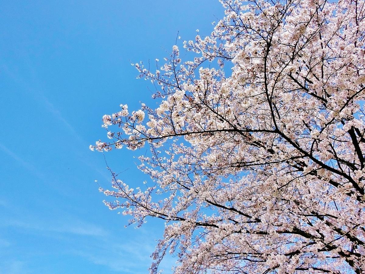 f:id:yumekake-john-ngohope:20210401162239j:plain
