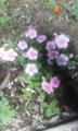 [花]きれいな花。でもあちらにいる小さな赤い花もいいと思う