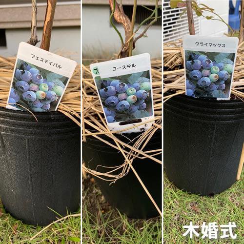 f:id:yumekuro789:20181029234451j:plain