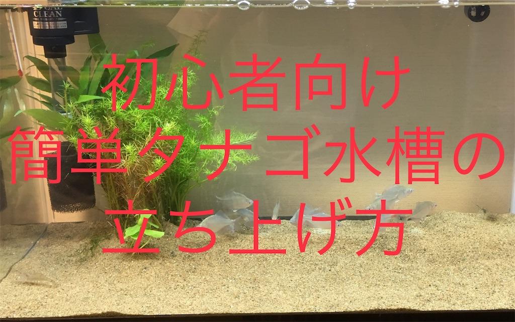 f:id:yumemiraitunagu:20190617191315j:image