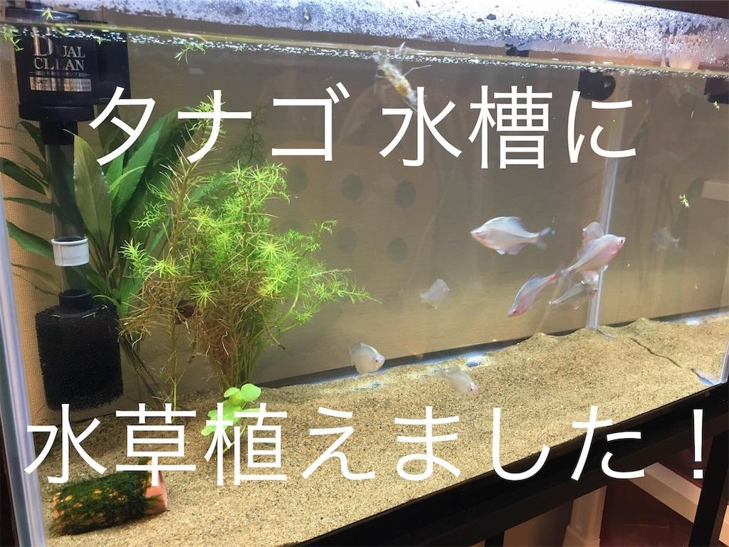 f:id:yumemiraitunagu:20190625031748j:image