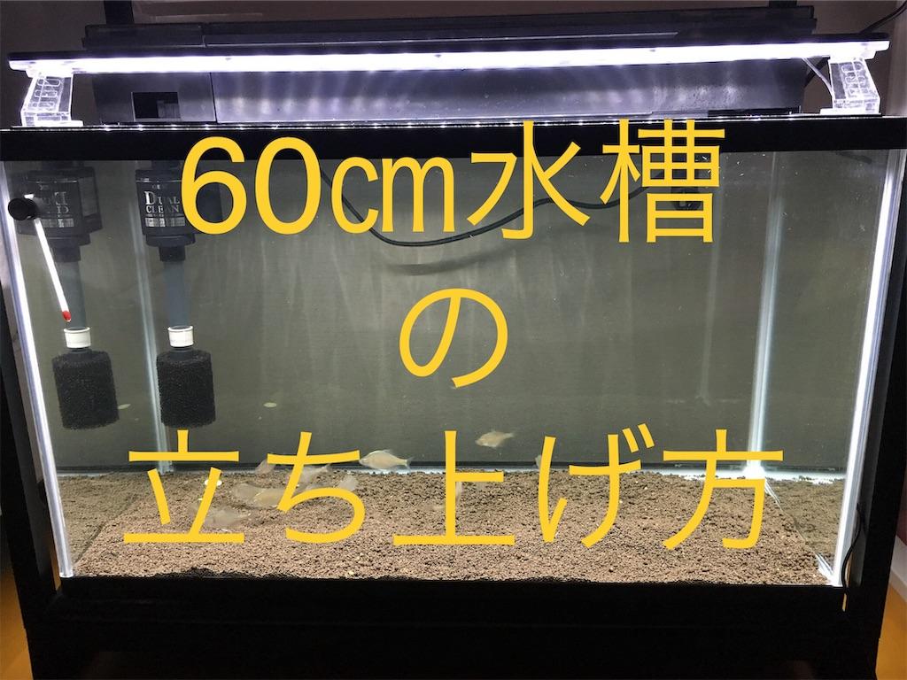 f:id:yumemiraitunagu:20190627040236j:plain