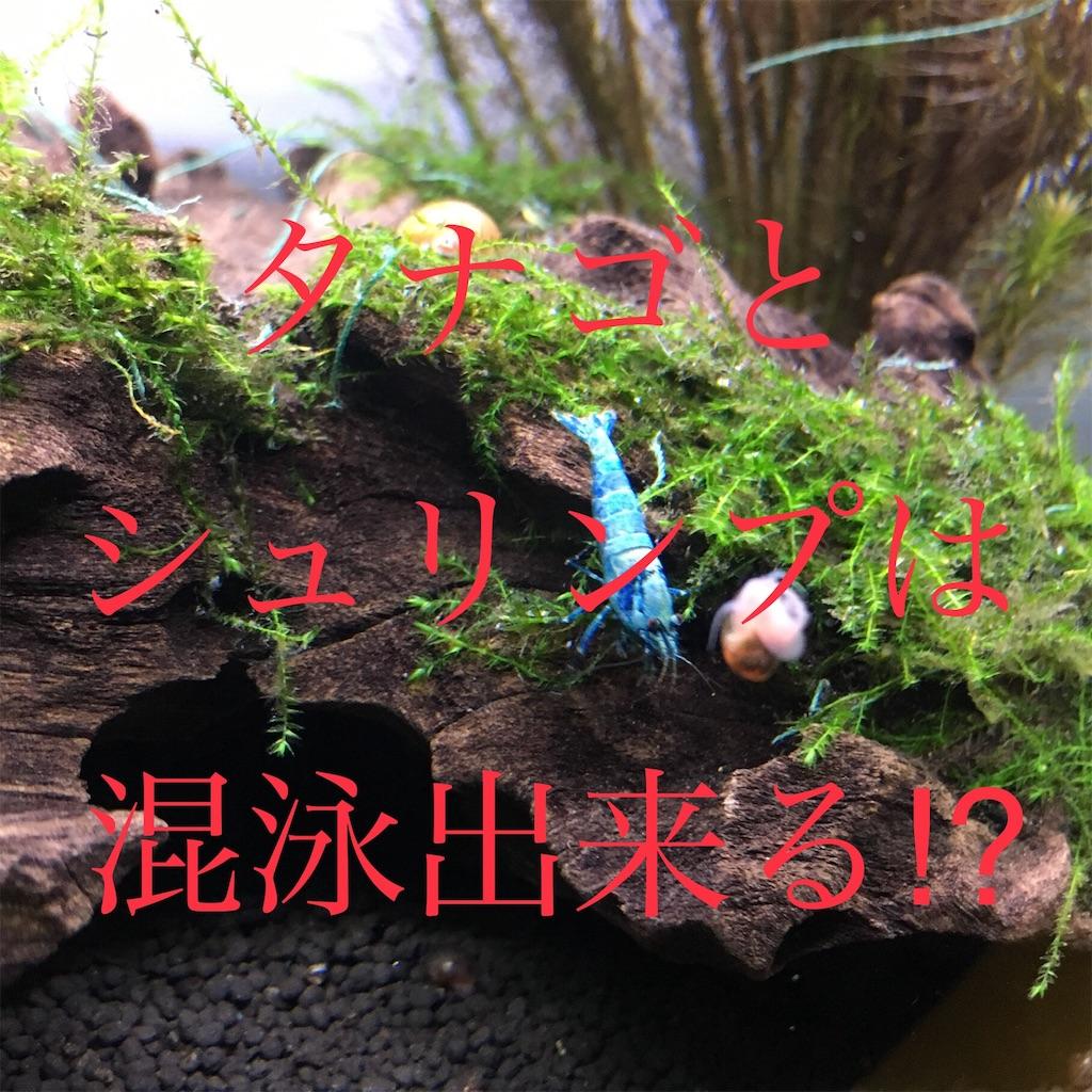 f:id:yumemiraitunagu:20190711021929j:image