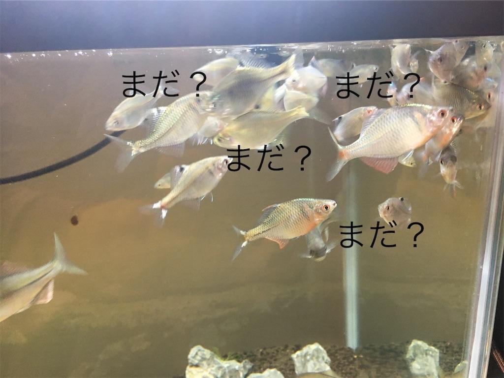 f:id:yumemiraitunagu:20191016052958j:image