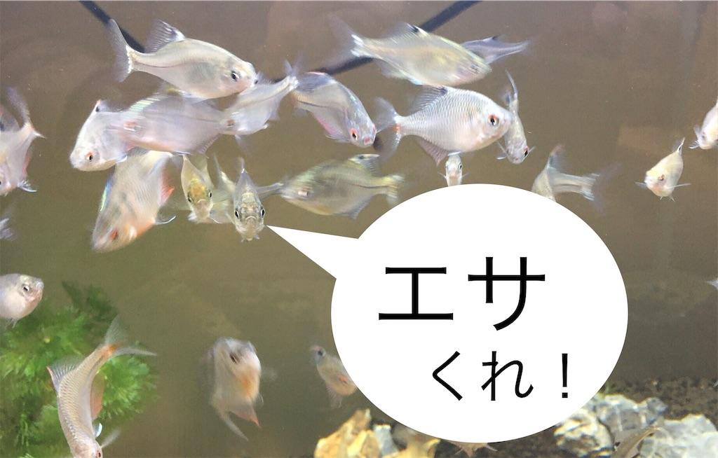 f:id:yumemiraitunagu:20191016053243j:plain