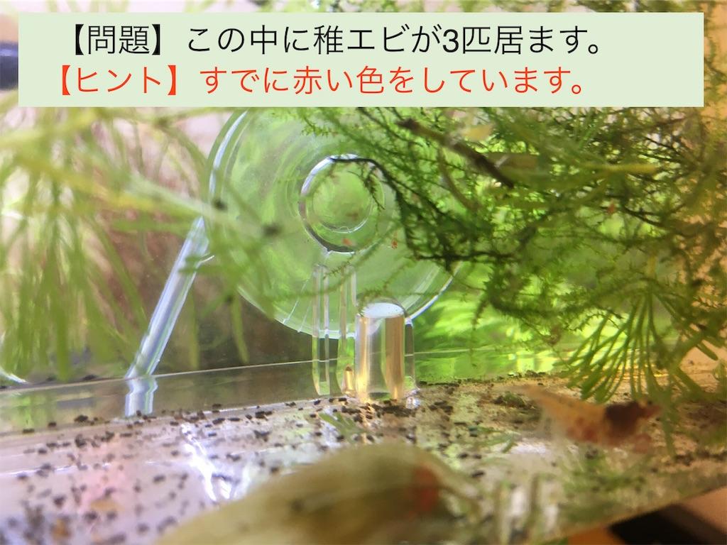 f:id:yumemiraitunagu:20191112051533j:image