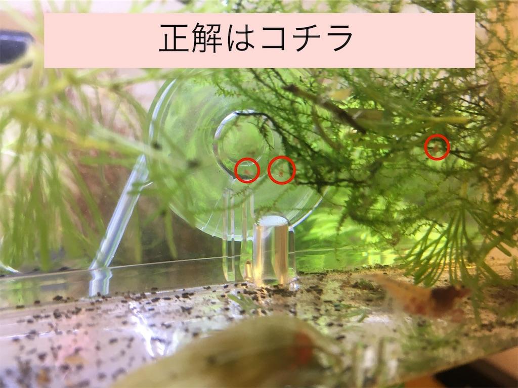 f:id:yumemiraitunagu:20191112051539j:image