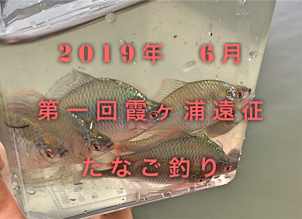 f:id:yumemiraitunagu:20191118090604j:plain