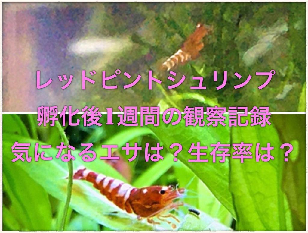 f:id:yumemiraitunagu:20191119192357j:image