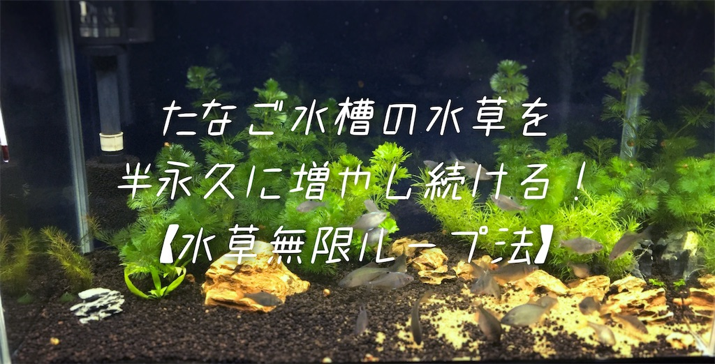 f:id:yumemiraitunagu:20191120215725j:image