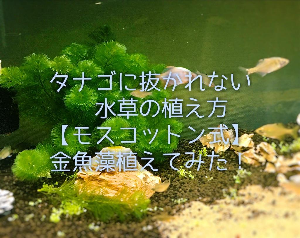 f:id:yumemiraitunagu:20191121070121j:plain