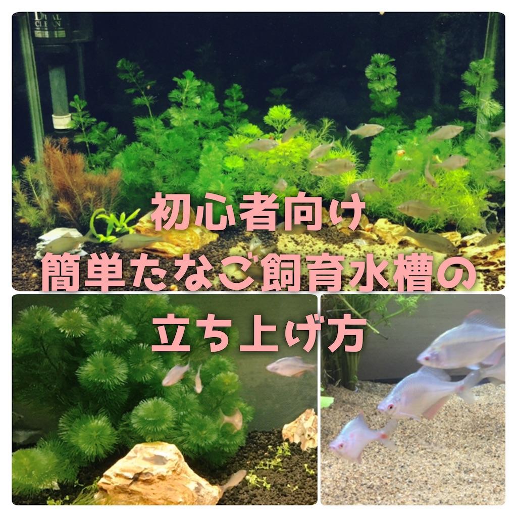 f:id:yumemiraitunagu:20191124003542j:plain