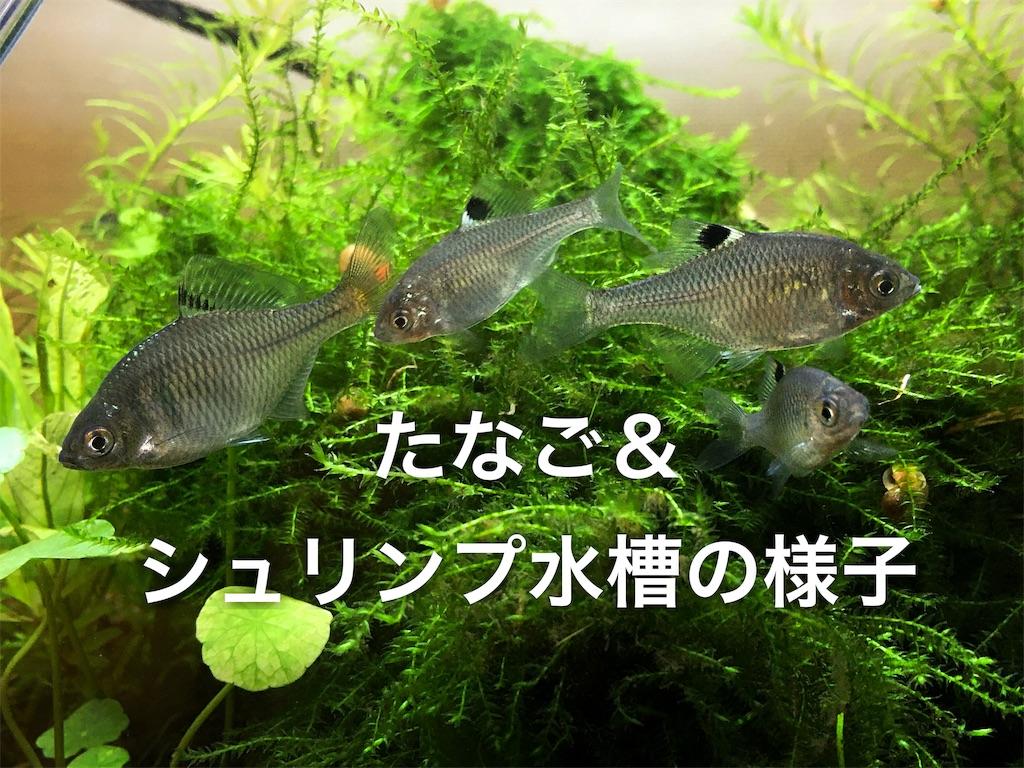 f:id:yumemiraitunagu:20191125065419j:plain