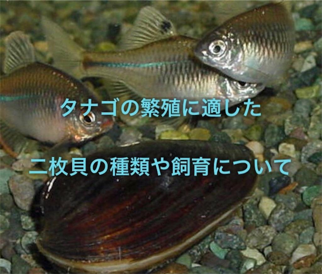 f:id:yumemiraitunagu:20191129200834j:plain