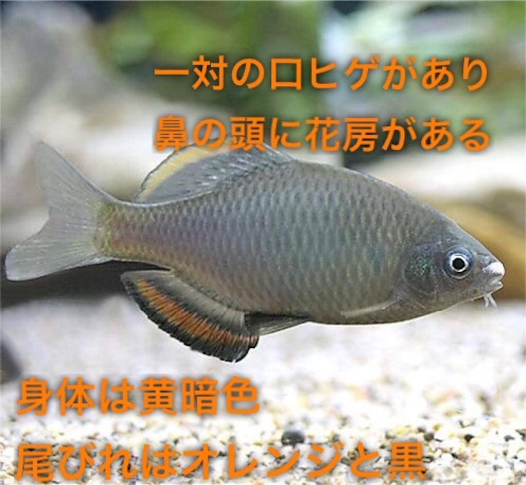f:id:yumemiraitunagu:20191202191700j:plain