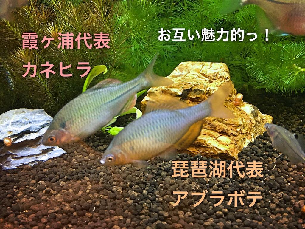 f:id:yumemiraitunagu:20191202191719j:plain